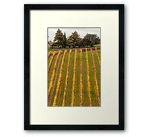 Vineyard in Autumn Framed Print