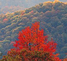 An Autumn Glow by Terri~Lynn Bealle