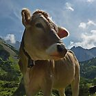 Mountain Cow by Kat Simmons