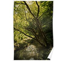 Stream in the woods Poster