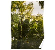 Forest in summer Poster