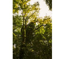 Forest in summer Photographic Print