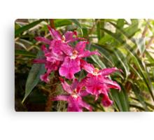 Orchid - A pleasant surprise  Canvas Print