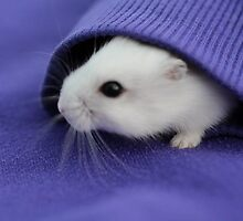 Cute White Hamster In Purple Hoodie  by BandanaCat