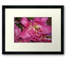 Pink Lillies Framed Print