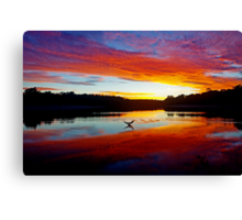 Double Crested Cormorant at Sunset Canvas Print