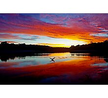 Double Crested Cormorant at Sunset Photographic Print