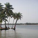Palm Trees on Beach by TravelGrl