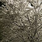 Snow on tree at night by TravelGrl