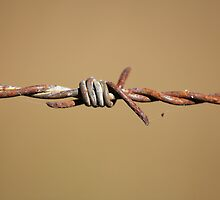 Rustic Barb Wire by Okeesworld