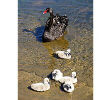 Mother swan Photographic Print