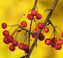 Red and Gold by lorilee