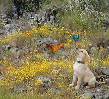 Zingo Puppy - for Ammi by Myillusions