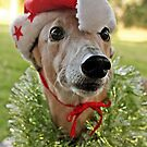 Christmas Holly by GreyhoundSN