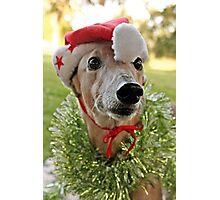 Christmas Holly Photographic Print