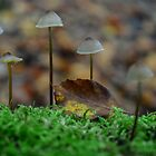Mushrooms at autumn by LightPhonics