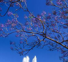 Jacaranda Hunting by Martin Canning