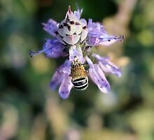 Talk to the...bumble bee... by Donna Keevers Driver