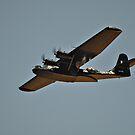 Warbirds Downunder 2013, Catalina by bazcelt