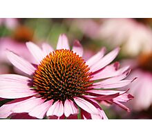 Flowers of summer Photographic Print