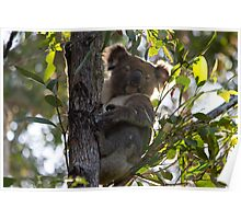 Backyard Blinky Bill Poster
