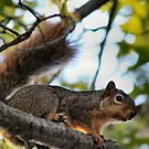 Busy Squirrel by Keala