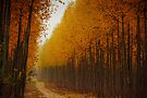Oregon Gold by Dan Mihai