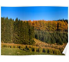 Glenkindie Trees in Autumn Poster