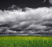 GREEN AND FIELD by Emilio Ferrer