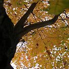 Fall 2013 4 by dge357