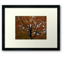 Fall 2013 7 Framed Print