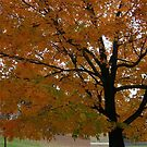 Fall 2013 8 by dge357