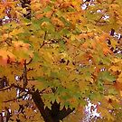 Fall 2013 14 by dge357