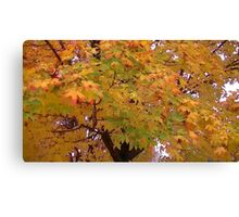 Fall 2013 14 Canvas Print