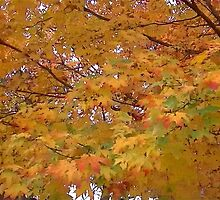 Fall 2013 15 by dge357