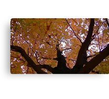 Fall 2013 17 Canvas Print