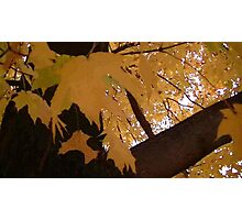 Fall 2013 21 Photographic Print