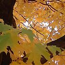Fall 2013 22 by dge357