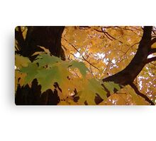 Fall 2013 22 Canvas Print