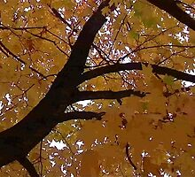 Fall 2013 24 by dge357