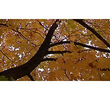 Fall 2013 24 Photographic Print
