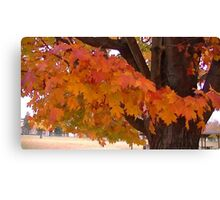 Fall 2013 25 Canvas Print