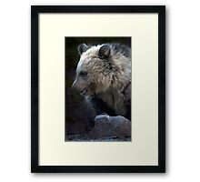 Grizzly Bear Cub-Signed-#3632 Framed Print