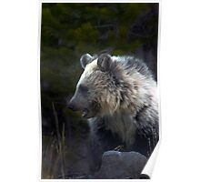 Grizzly Cub-Signed-#3644 Poster