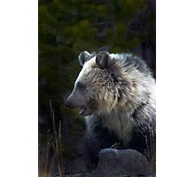 Grizzly Cub-Signed-#3644 Photographic Print