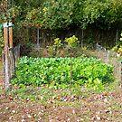 The Autumn Salad Garden by Vivian Eagleson