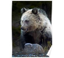 Grizzly Bear Cub-Signed-#3686 Poster