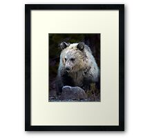 Grizzly Bear Cub-Signed-#3692 Framed Print