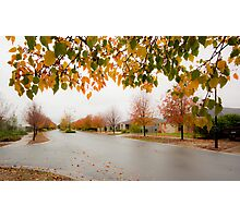 Beauty in Suburbia Photographic Print