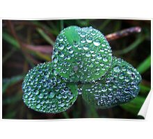 3 green leaves with many waterdrops Poster